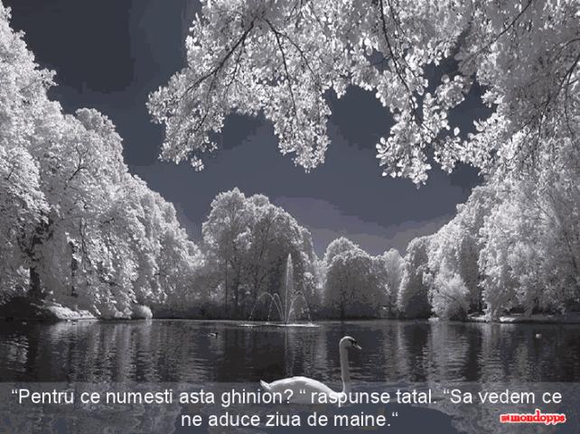 viewer (90)