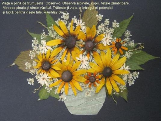 viata-e-plina-de-frumusete-1_3b9622015ac02e