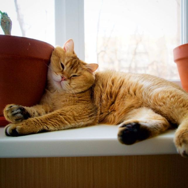 Hosico-Cat-58b920b0c1f60__880