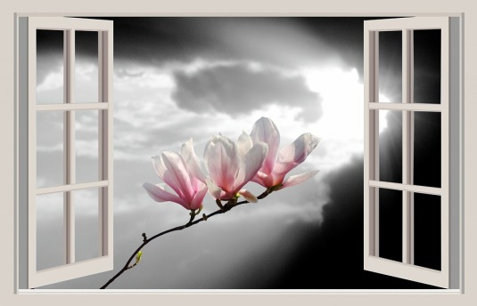 magnolia-1392460_960_720
